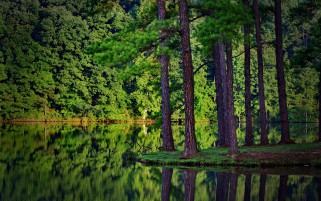 Green Reflection wallpapers and stock photos