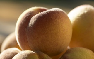 Peaches Macro wallpapers and stock photos