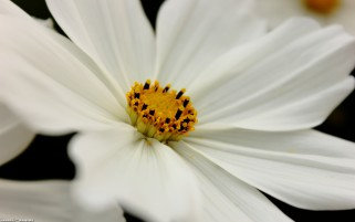 Previous: White flower
