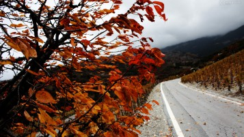 Autumn Wind wallpapers and stock photos