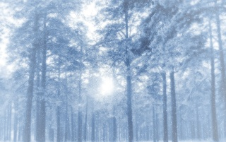 Winter forest wallpapers and stock photos
