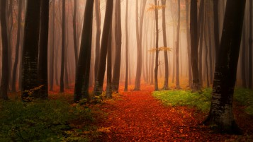 Autumn Startet wallpapers and stock photos