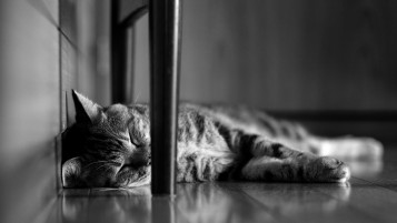 Lazy Cat wallpapers and stock photos