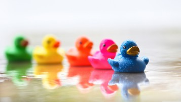Cute Colourful Rubber Ducks wallpapers and stock photos
