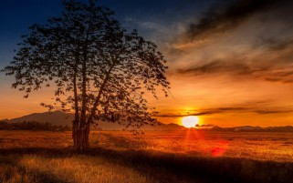 Malaysia Tree Sunset wallpapers and stock photos