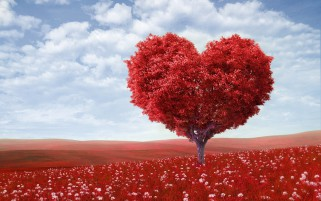 Red Heart Tree Field Sky wallpapers and stock photos