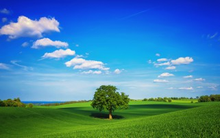 Tree Middle Field Clouds Sky wallpapers and stock photos