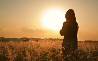 Girl Field Silhouette Sunset wallpapers and stock photos