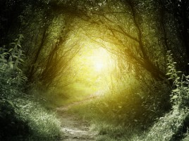 Forest Trail Grass Sun Light wallpapers and stock photos