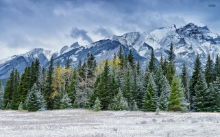 Snowy Pines Mountains Field wallpapers and stock photos