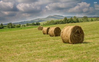 Hay Bales Cloud Meadow Romania wallpapers and stock photos