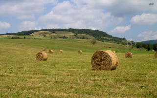 Hay Bales Field Trees Romania wallpapers and stock photos