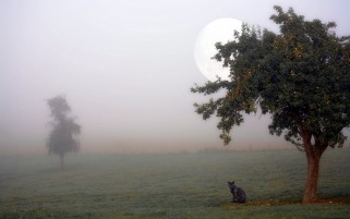 Kitty Foggy Field Trees Moon wallpapers and stock photos