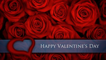 Red Roses for Valentines Day wallpapers and stock photos