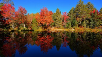 Next: Colourful Forest Reflection