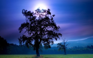 Dark Trees Purple Sky Field wallpapers and stock photos