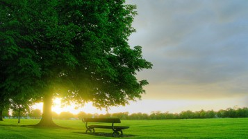 Mighty Tree Bench Field Sun wallpapers and stock photos