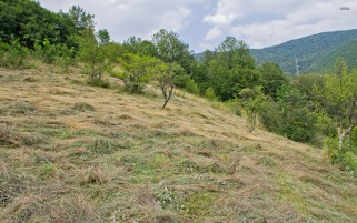 Mowed Grass Hill Side Trees wallpapers and stock photos