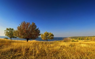 Golden Field Trees Ocean Sky wallpapers and stock photos