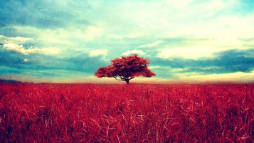 Pink Tree Field & Sky wallpapers and stock photos