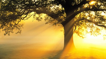 Dark Tree Sun Beams Grass wallpapers and stock photos