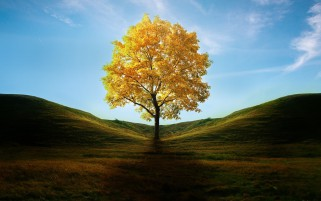 Golden Tree wallpapers and stock photos