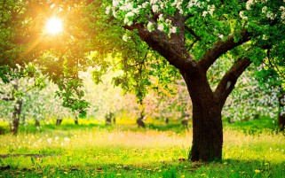 Trees Grass Flowers Sunny Day wallpapers and stock photos