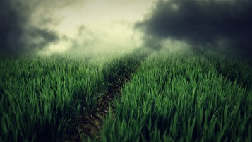 Fresh Grass Small Trail Misty wallpapers and stock photos
