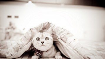 Lovely Liitle White Kitty wallpapers and stock photos