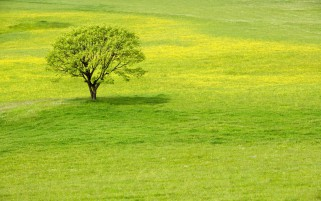Next: Grass Green Meadow & Tree
