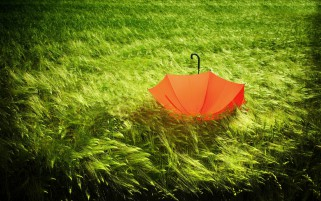 Random: Wheat Field Umbrella Windy Day