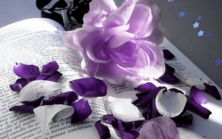Violet Pleasure wallpapers and stock photos