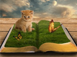 Very Cute Kitten & Butterflys wallpapers and stock photos