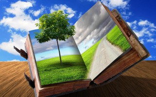 Young Tree Old Book wallpapers and stock photos