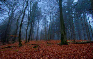 Noviembre En Bosque wallpapers and stock photos