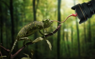 Chameleon Camera wallpapers and stock photos