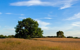 Wide Tree Field Sky Clouds wallpapers and stock photos