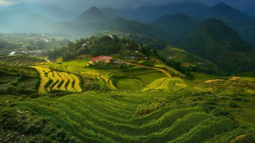 Rice Terraces in Vietnam wallpapers and stock photos