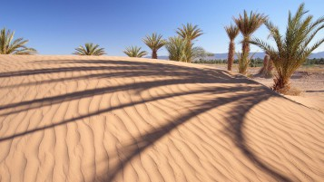 Desert Palm Trees wallpapers and stock photos