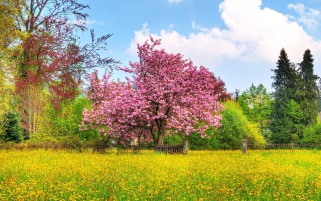 Pink Spring Tree Yellow Flower wallpapers and stock photos