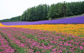 Random: Lilac Yellow Pink Flower Field