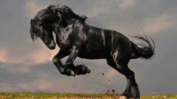 Gorgeous Black Horse wallpapers and stock photos