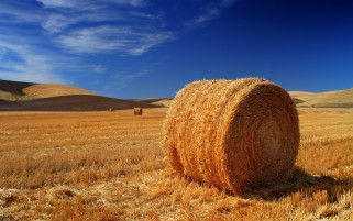Las balas de heno Campo Cosecha Sky wallpapers and stock photos