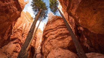 National Park Bryce Canyon wallpapers and stock photos