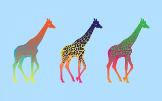 Giraffes Three Series Colorful wallpapers and stock photos