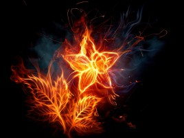 Fire Flower Digital Art wallpapers and stock photos