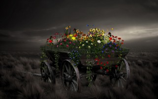 Vehicle Wheels Flowers Field wallpapers and stock photos