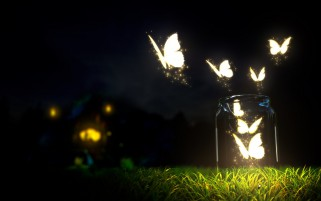 Glowing Butterflys Bottle Gras wallpapers and stock photos