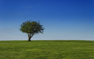 Random: Beauty Lonesome Tree & Field