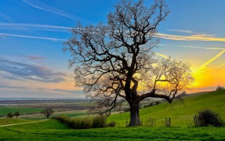 Bare Tree Fields Bushes Sunset wallpapers and stock photos